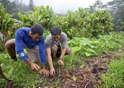 Farmers planting Kratom